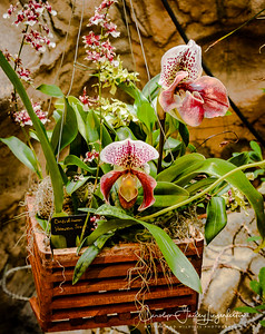 Many orchids were in hanging baskets.