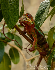 A lizard I think