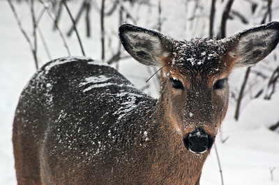 Posted this deer picture on blipfoto