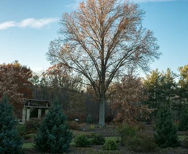 Entrance to the Rhododendren Garden