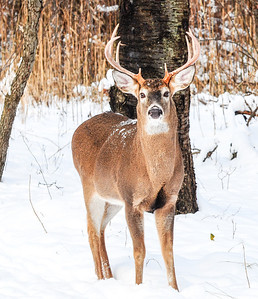 A pretty big buck...