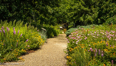 Trail into the wildflower garden