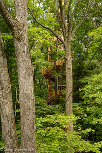 The Emergent Tower is 12 stories high and emerges above the tree tops.
