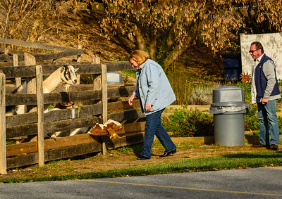 These goats were outside the Jean Bonnet Tavern.  They were really cute and enjoyed the attention of other guests. I'm hoping they weren't on the menu at some future time.