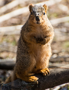 Squirrel photo op!