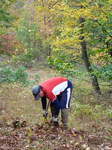 Jeff pulling saplings.