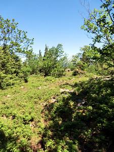 New trail.