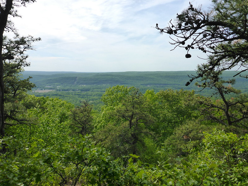 View west in Huckleberry Ridge State Forest (5/24/15).