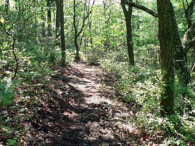 New trail (6/22/15).