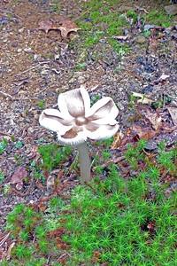 Mushroom along hte new SRT section.