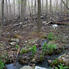 End of the burn area, near the stream.