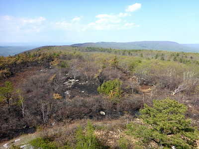 View (north) from the fire tower.