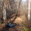 Cleared towpath with Bob's bike (12/10/15).
