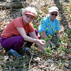 Gely and Judy salvaging currant plants.