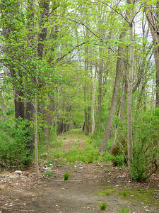 D&H Canal towpath in Westbrookville (5/12/14).