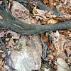 Garter snakes 4/1/14.