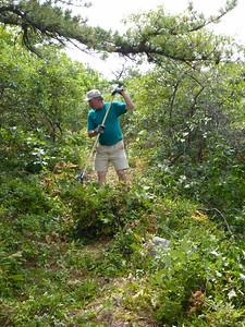 Phil raking the brush.