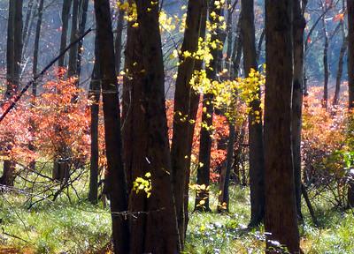 Harriman foliage 11-4-14a