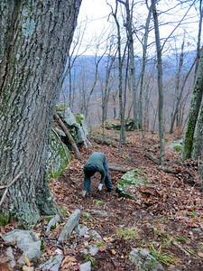 John pulling saplings.