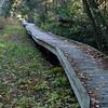 Cedar Swamp