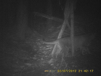 See some video of this trail cam location here: http://www.youtube.com/watch?v=-ZbGQDHLrtg
