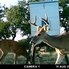 MOULTRIE DIGITAL GAME CAMERA