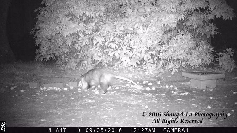 Possums 09-05-2016