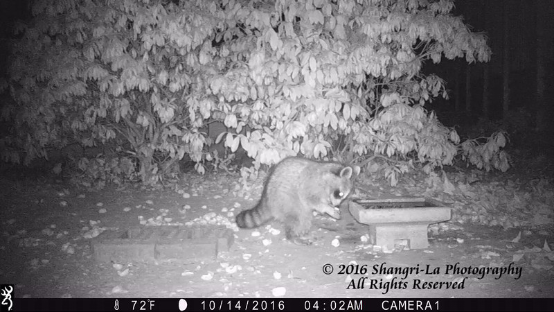 10-13-16 Little Raccoon-2