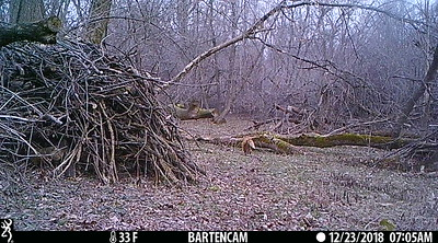 Red fox just 20 minutes after the coyote in the last video.