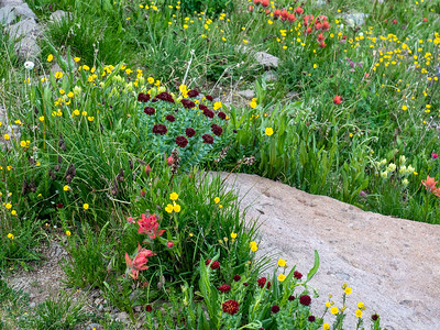 An example of the flower gardens we pased in the upper basin.