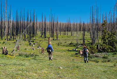 """Mary Anne and Carol heading up the """"trail"""". This part of the forest was burned in the West Fork fire of 2013."""