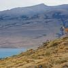 A guanaco keeping watch on the ridge, above Lago Sarmiento.
