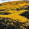 Cruces Basin aspen