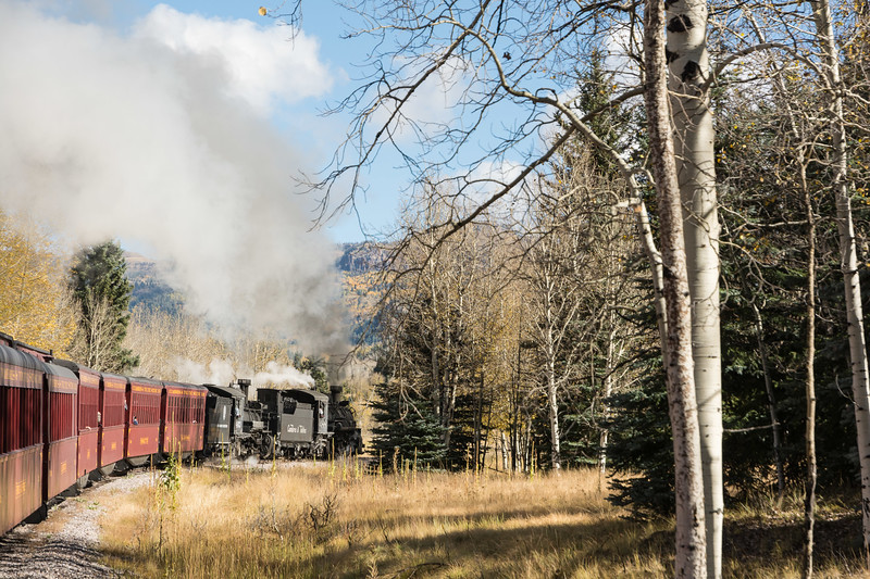 Steaming through the forest