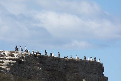 Lots of cormorants enjoying the show from above
