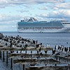 Imperial Cormorants, lined up to welcome a cruise ship into the Punta Arenas harbor.