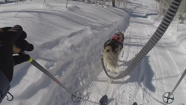 West Fork Skijoring