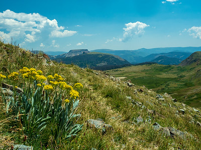Trailside flowers and Lookout Mountain