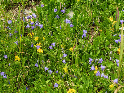 Harebells along our route down. We took a more direct line on the descent.
