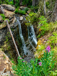 Waterfall on Wolf Creek, with Fireweed, at the end of our hike. Only a few rain drops fell before we were in the cars, then the skies opened.