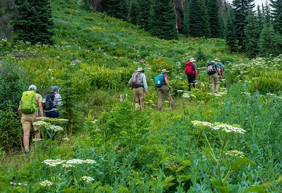 Hiking through alpine meadows as we get underway. At this point, we are on an old logging road.