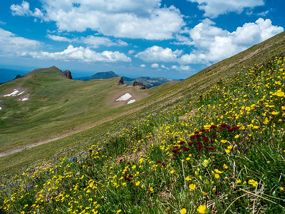 View across alpine flower gardens on Summit's flank, as a few clouds build up.