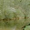 Blackwater Creek at Hollins Mill Road IV (01368)