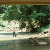 Blackwater Creek at Hollins Mill Road II (01361)