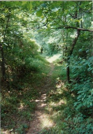 Blackwater Creek Trail Footpath II (01353)