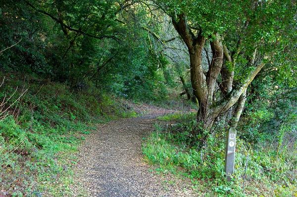 Bear Creek Trail - Briones, February 5, 2011