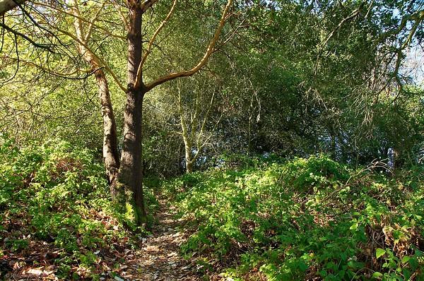 Hike to Brittle Leaf, October 9, 2011