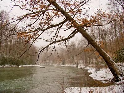 Leaning Tree at Blacklick Creek