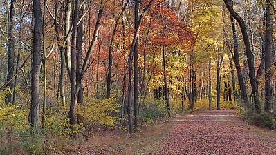 Fall Scene on the Hoodlebug