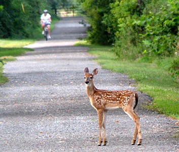 Doe Crossing Ahead
